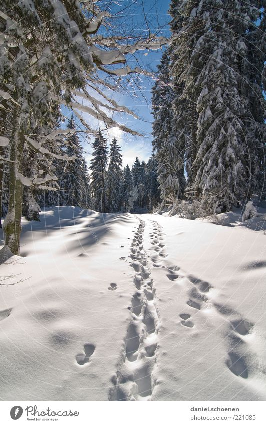 towards winter Vacation & Travel Tourism Trip Winter Snow Winter vacation Mountain Hiking Climate Beautiful weather Ice Frost Forest Footprint Bright Blue White
