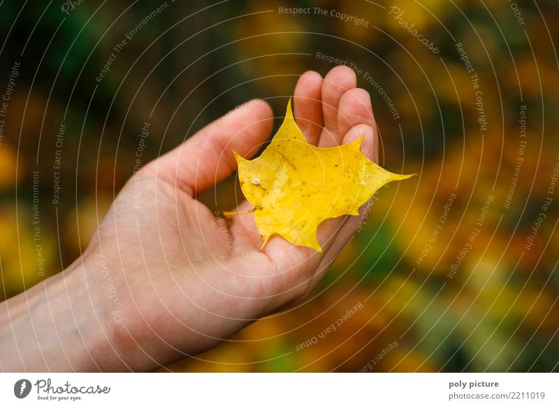 Child Woman Human being Nature Youth (Young adults) Young woman Plant Town Green Tree Hand Leaf Adults Yellow Environment Autumn