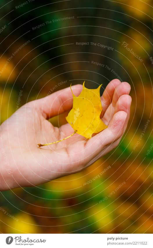 Maple leaf in the hand of a young lady Human being Feminine Young woman Youth (Young adults) Woman Adults Hand Fingers 8 - 13 years Child Infancy 13 - 18 years