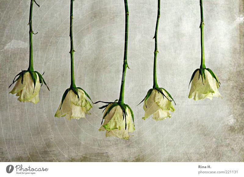 Green Plant Art Arrangement Rose Attachment Stalk Flower Hang Blossom leave Thorn 5