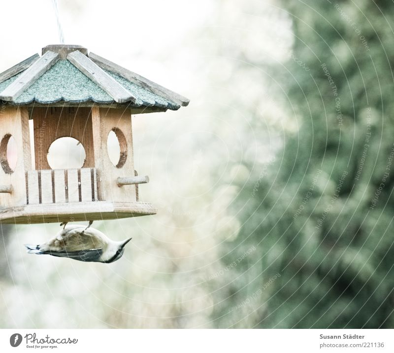 Nutrition Animal Autumn Bird Wing Mysterious Discover Appetite Hide Hang Beak Feed Claw Sparrow Birdseed Birdhouse