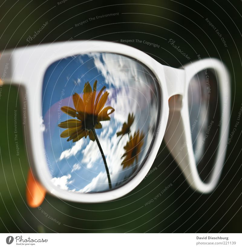 I want summer!!! Plant Sky Clouds Summer Beautiful weather Flower Blossom Accessory Eyeglasses Sunglasses Blue Black White Mirror image Spectacle frame