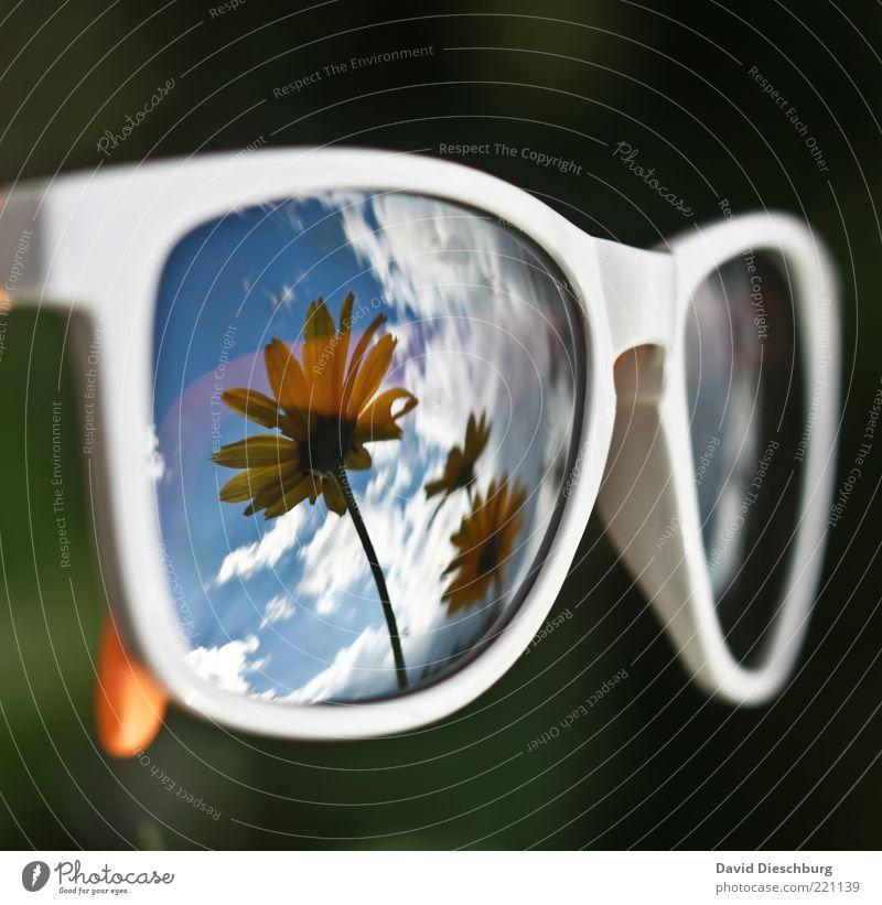 Sky Blue White Summer Plant Flower Clouds Black Blossom Eyeglasses Beautiful weather Mirror Seasons Stalk Sunglasses Blue sky