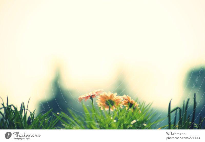 Nature Beautiful White Flower Green Blue Plant Summer Black Yellow Meadow Grass Horizon Retro Stalk Blade of grass