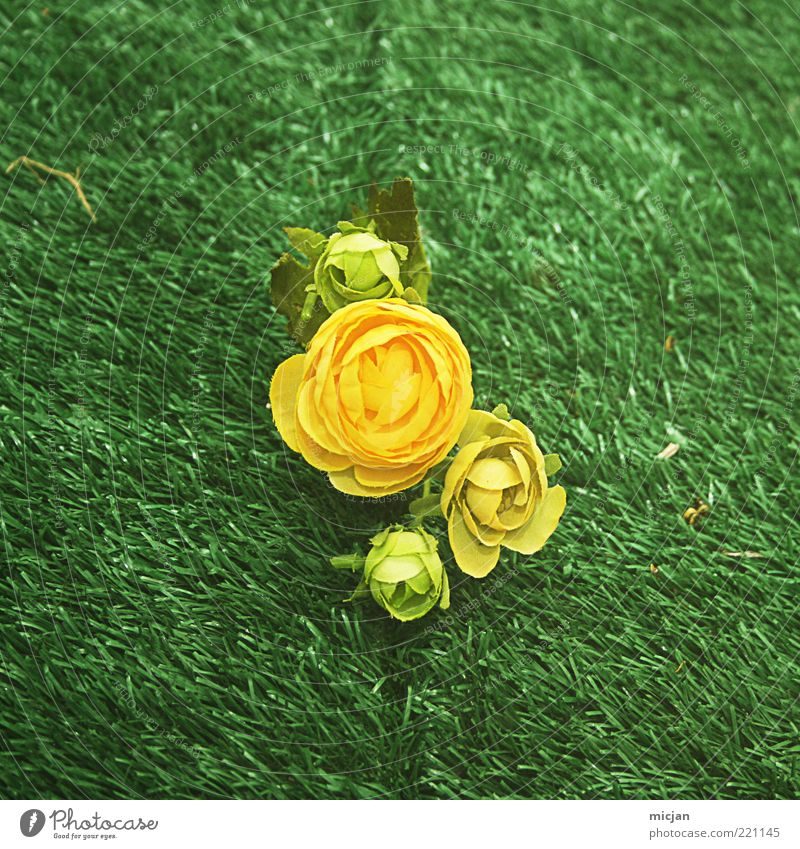 Nature Beautiful Flower Green Plant Loneliness Yellow Meadow Blossom Grass Spring Rose Retro Lawn Kitsch 4