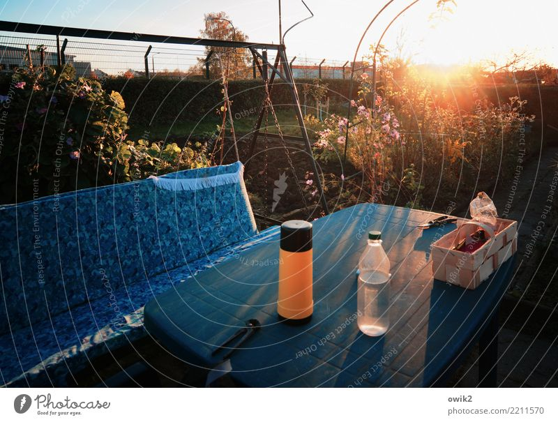 In the evening in the garden Table Hollywood swing Swing Pair of pincers pruning shears Environment Autumn Beautiful weather Plant Tree Bushes Rose