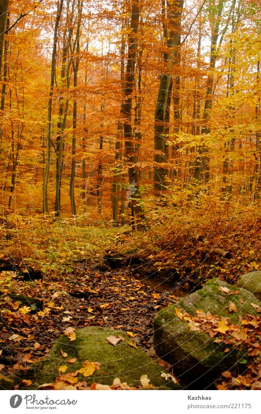 autumn 2 Nature Tree Plant Leaf Black Yellow Forest Autumn Stone Park Germany Environment Europe Tourist Attraction Wild plant