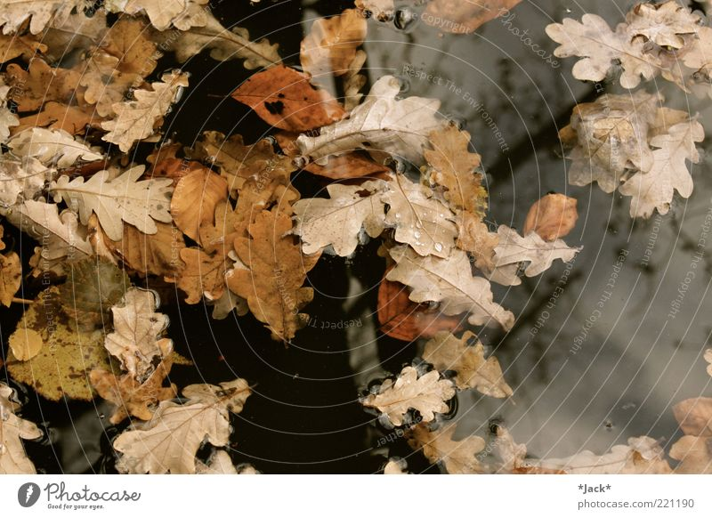 When autumn came... Calm Environment Nature Water Autumn Leaf Transience Colour photo Exterior shot Day Bird's-eye view Float in the water Oak leaf
