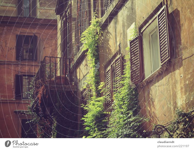 October in Rome Town Old town House (Residential Structure) Building Architecture Facade Balcony Window Green Shutter Tendril Natural growth Creeper Derelict