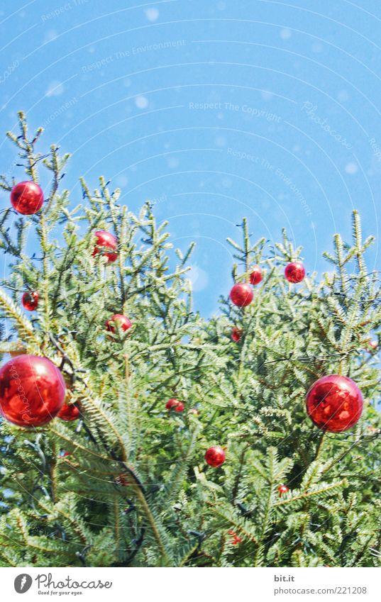 Sky Christmas & Advent Blue Tree Red Winter Snow Snowfall Feasts & Celebrations Glittering Decoration Kitsch Christmas tree Sphere Fir tree