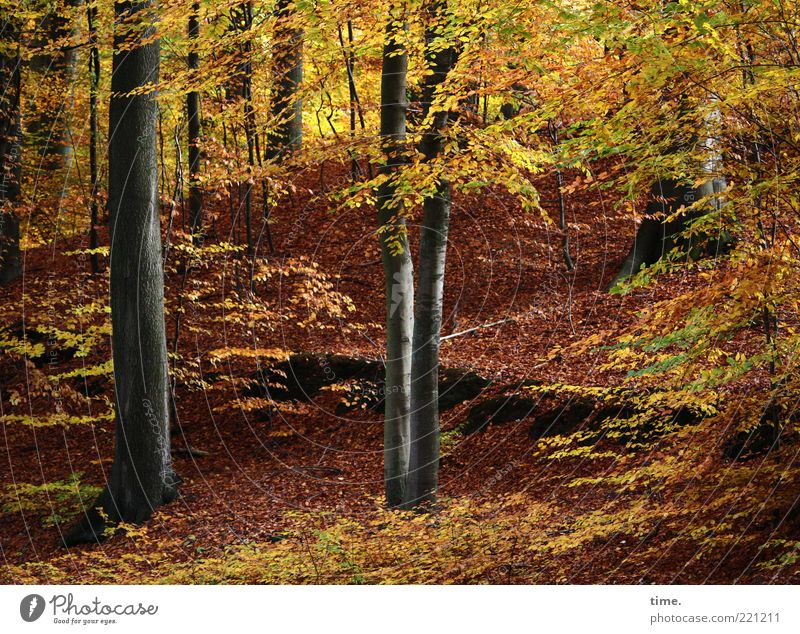 Nature Beautiful Tree Leaf Yellow Forest Autumn Brown Environment Gold Branch Exceptional Hill Illuminate Dynamics Upward