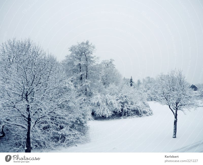 Sky Tree Winter Calm Cold Snow Meadow Landscape Ice Bright Environment Frost Bushes Change Climate Village
