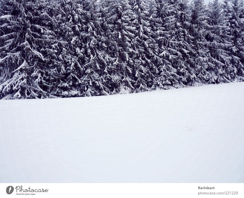white room. Well-being Relaxation Calm Winter Snow Environment Nature Landscape Climate Ice Frost Tree Forest Deserted Line Change Fir tree Winter mood