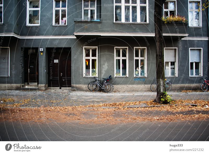 City Tree Leaf House (Residential Structure) Street Window Autumn Berlin Bright Door Facade Living or residing Gloomy Beautiful weather Sidewalk Balcony