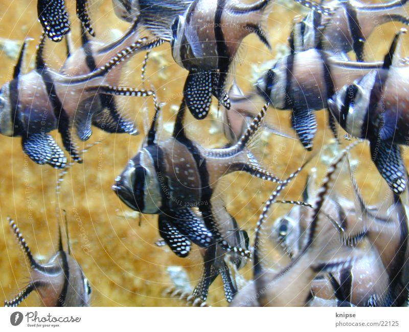 fishies Dive Multicoloured Transport Fish Flock Multiple