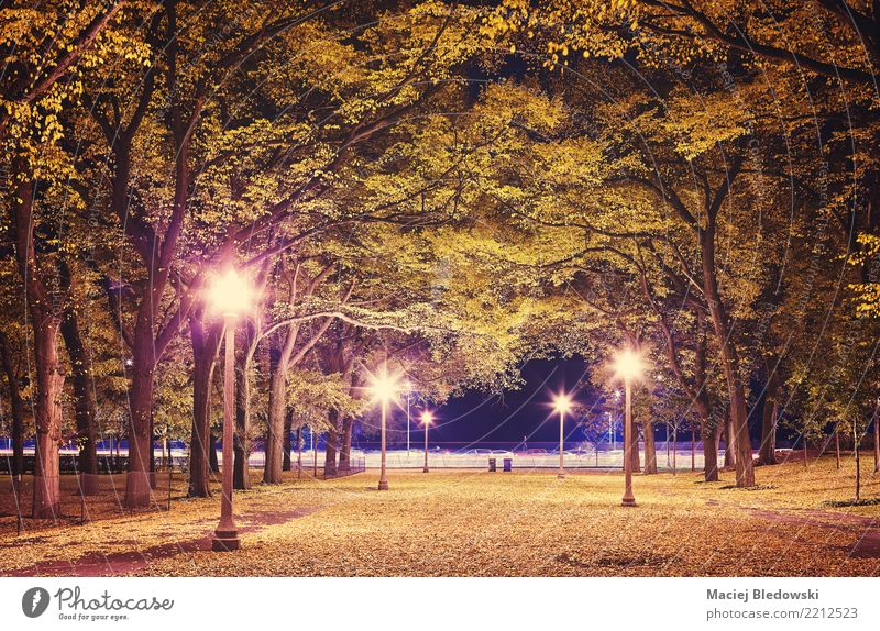 City park at night. Sightseeing Lamp Autumn Tree Leaf Park Town Green Violet Pink Moody Sadness Homesickness Relaxation Mysterious Seasons Chicago Photography
