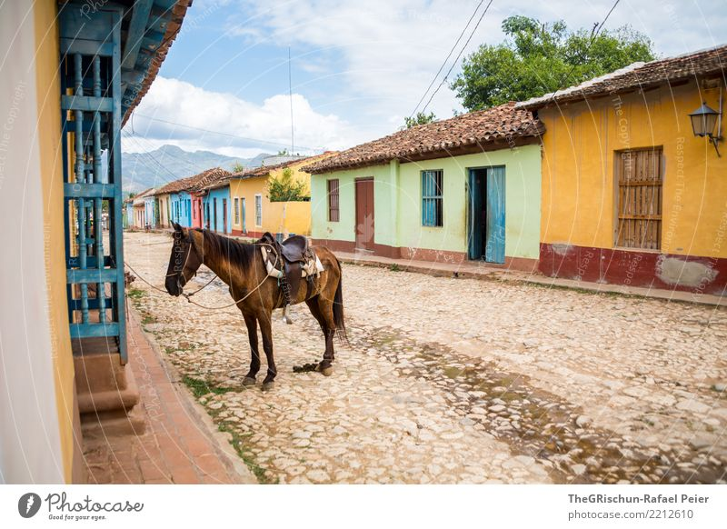 Trinidad Animal Farm animal 1 Blue Brown Multicoloured Yellow Green Paving stone Street Trinidade Cuba Travel photography Horse Ride Clouds Break Wait