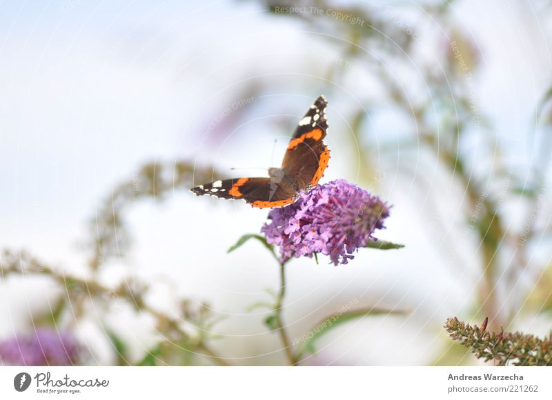 Last Summer II Nature Plant Animal Beautiful weather Blossom Wild plant Wild animal Butterfly 1 Flower Blossoming Fragrance To feed Wait Elegant Free Brown