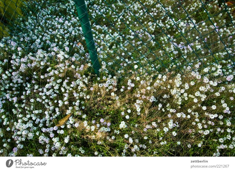 Nature White Green Plant Summer Leaf Meadow Environment Grass Garden Blossom Growth Natural Many Blossoming Fence