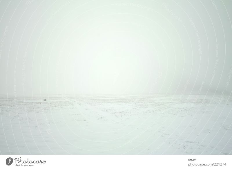 on the other side Landscape Winter Fog Snow Mountain Thueringer Wald Relaxation Infinity Cold White Calm Longing Loneliness Ease Nature Transience