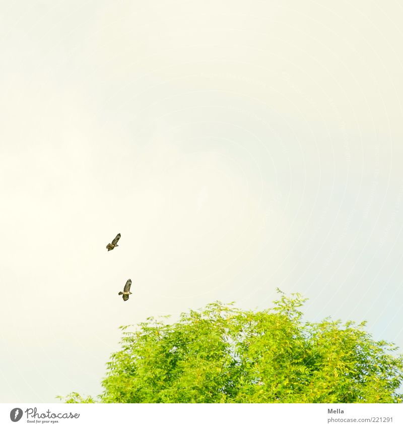 Nature Sky Tree Green Plant Animal Above Movement Freedom Air Moody Together Bird Pair of animals Environment Flying