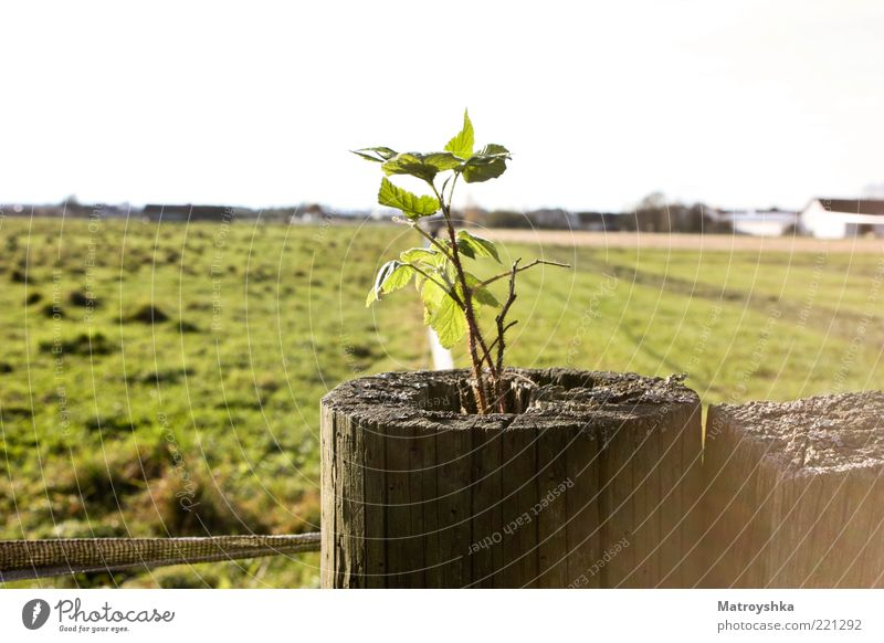 New Life Beautiful weather Plant Bushes Wild plant Field Wooden stake Growth Power Willpower Colour photo Exterior shot Detail Day Shadow Sunlight