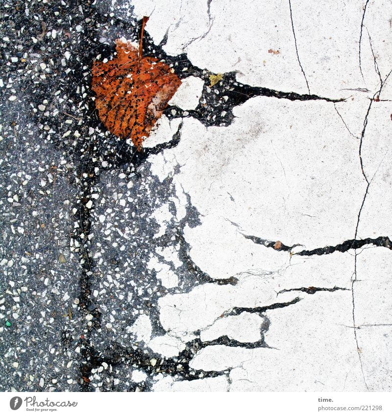 White Leaf Autumn Gray Lanes & trails Brown Environment Wet Broken Floor covering Asphalt Transience Stripe Crack & Rip & Tear Tar Limp