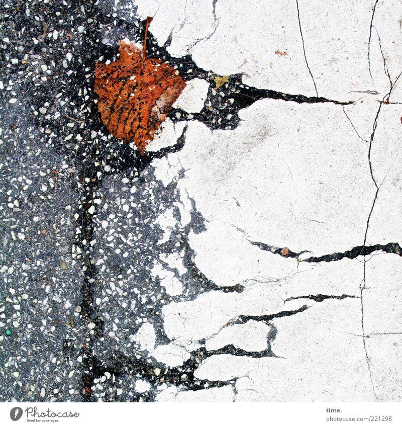 White Leaf Autumn Gray Lanes & trails Brown Environment Wet Broken Floor covering Asphalt Transience Stripe Crack & Rip & Tear Tar Limp