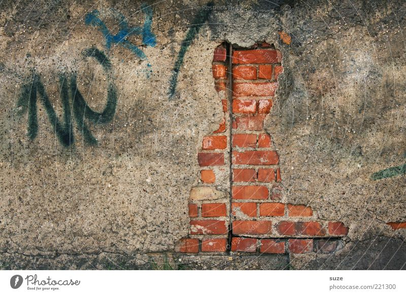 Cat Old Graffiti Wall (building) Wall (barrier) Funny Art Facade Dirty Authentic Transience Derelict Brick Past Decline Figure