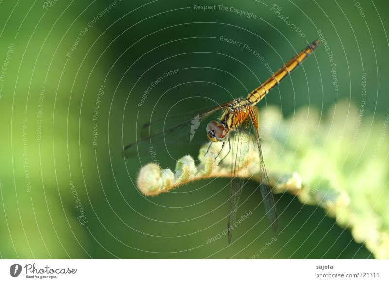 Nature Green Plant Animal Relaxation Wait Sit Soft Wing Insect Delicate Wild animal Foliage plant Dragonfly Pastel tone Copy Space left