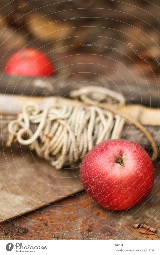 Nature Red Summer Nutrition Autumn Wood Line Brown Healthy Food Fruit Rope Fresh Round Lie Apple