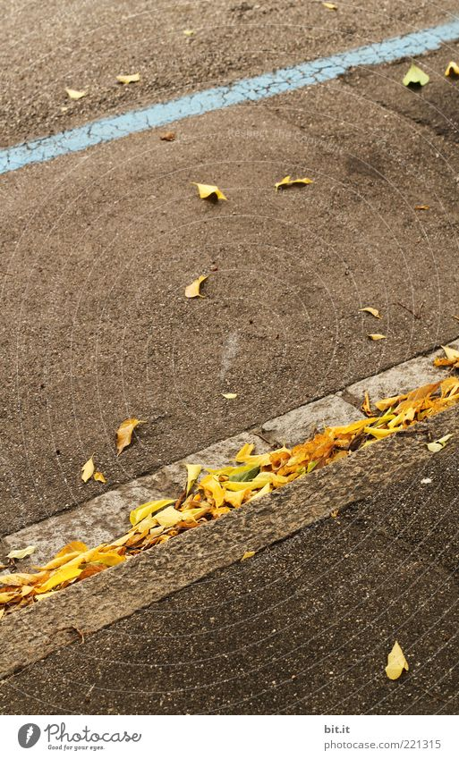 Leaf Yellow Autumn Street Gray Lanes & trails Stone Line Brown Perspective Change Stripe Simple Asphalt Under Dry