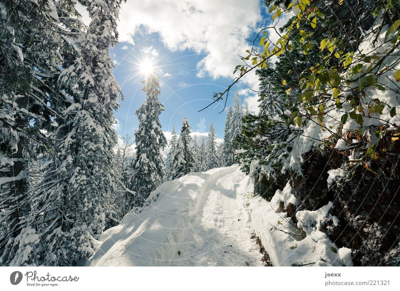 Nature Sky White Tree Sun Green Blue Winter Calm Clouds Cold Snow Mountain Lanes & trails Landscape Ice