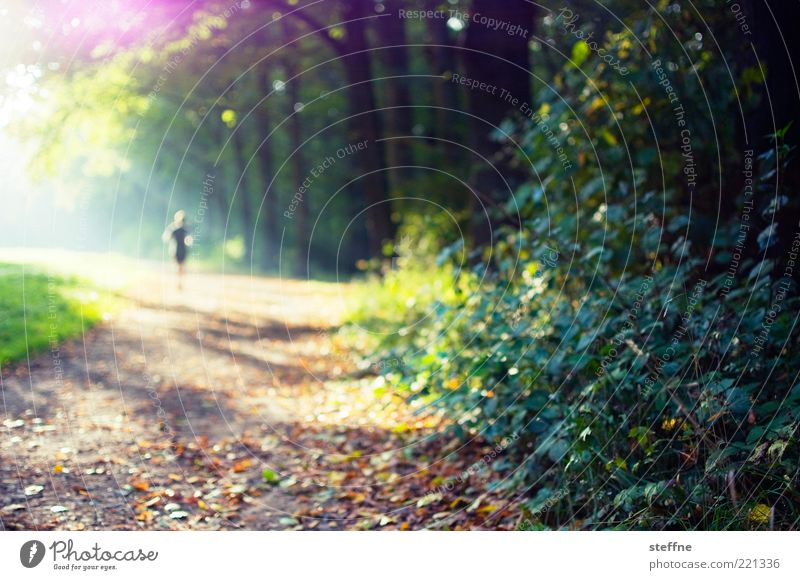 Human being Nature Tree Sun Forest Autumn Park Walking Bushes Footpath Beautiful weather Individual Jogging Sports Jogger