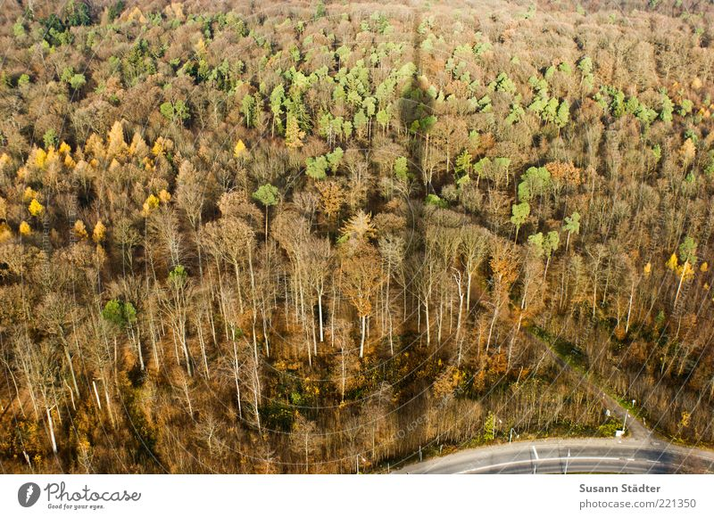 Tree Plant Street Forest Cold Autumn Above Landscape Brown Tall Vantage point Change Curve Beautiful weather Treetop