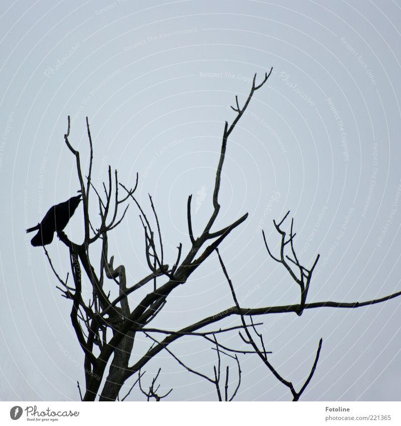 Nature Sky White Tree Plant Black Animal Dark Cold Autumn Air Bird Environment Gloomy Creepy Wild animal