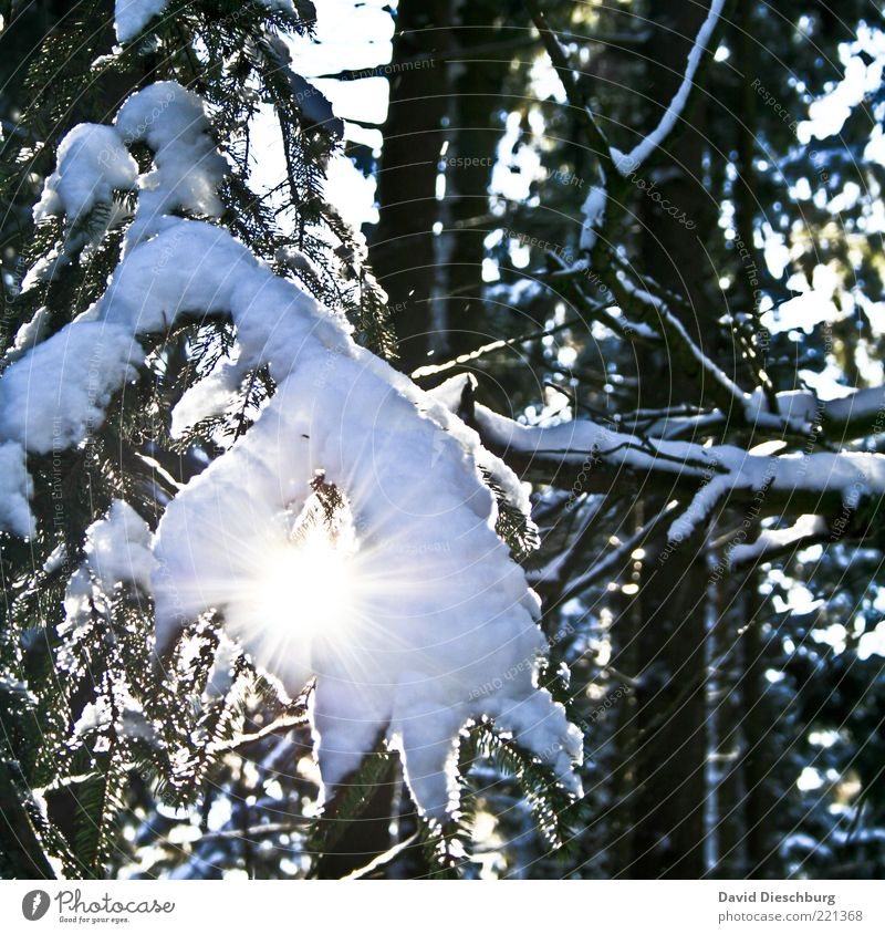 Snow vs. sun Nature Plant Winter Beautiful weather Ice Frost Warmth Tree Forest Black White Branch Winter mood Winter forest Lighting December January Cold