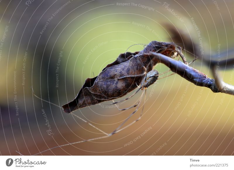 Nature Plant Leaf Animal Autumn Change Thin To hold on Hide Hang Spider Twig Embrace Crawl Crouch Hiding place