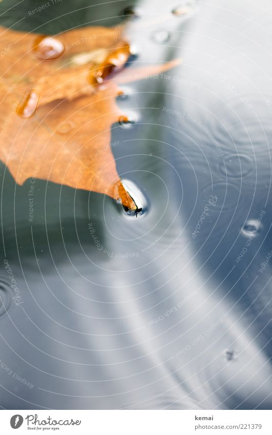 Small circles Environment Nature Water Autumn Climate Bad weather Storm Rain Leaf Dark Wet Brown Gold Float in the water Circle Surface of water Colour photo