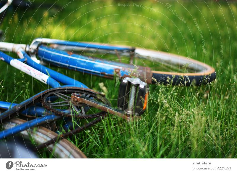 Blue wheel in green Summer Grass Bicycle Old Green Serene Colour photo Exterior shot Deserted Copy Space right Copy Space top Day Meadow Lie Bicycle frame Pedal