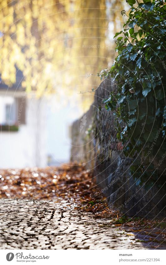 Nature Plant Calm House (Residential Structure) Autumn Wall (building) Wall (barrier) Lanes & trails Environment Idyll Footpath Cobblestones Beautiful weather