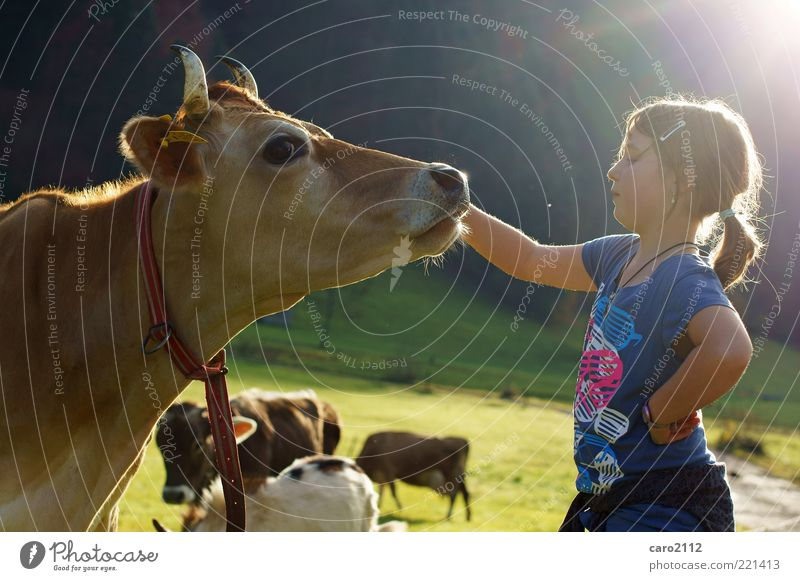 Human being Child Nature Girl Animal Friendship Tourism T-shirt Group of animals Natural Infancy Brave Cow Attachment Alpine pasture Braids