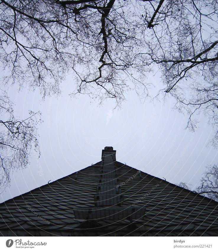 Sky Tree Dark Building Stairs Arrangement Esthetic Roof Point Exceptional Chimney Go up Symmetry Bleak Branchage