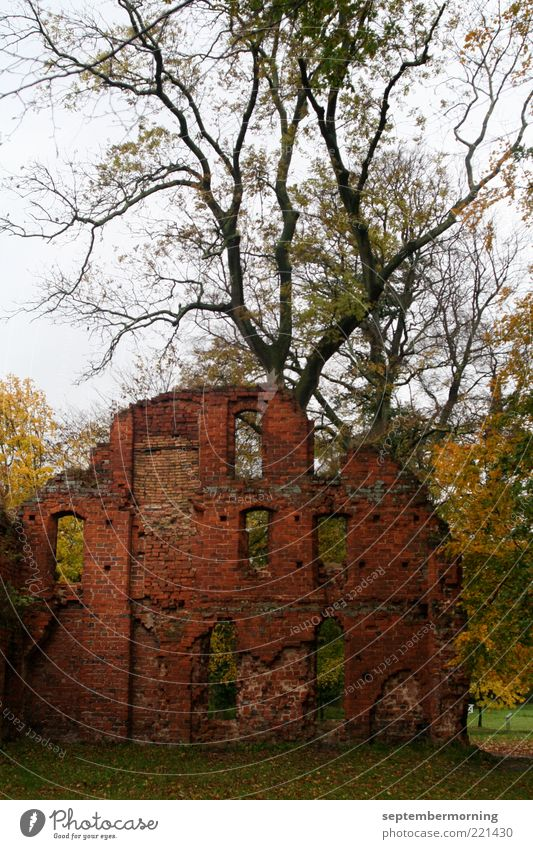 Old Tree Autumn Wall (barrier) Broken Derelict Decline Past Ruin Twigs and branches Plant Masonry Brick wall