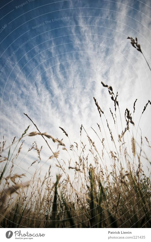 Just Got To Be Environment Nature Landscape Plant Elements Air Sky Clouds Summer Climate Weather Beautiful weather Grass Leaf Blossom Foliage plant Wild plant