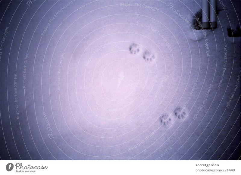 Blue Winter Black Dark Cold Snow Tracks Analog Under Evening Animal tracks Vignetting Morning Snow track