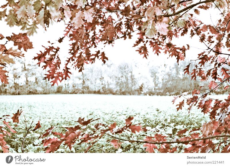 Cold autumn day Frame Nature Landscape Plant Autumn Tree Leaf Field Forest Edge of the forest Deserted Freeze Calm Transience Loneliness Idyll Life Change Time