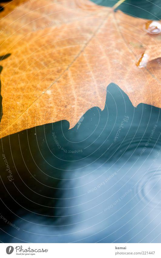 Nature Water Calm Leaf Dark Autumn Rain Brown Waves Environment Wet Gold Circle Climate Air bubble Spiral