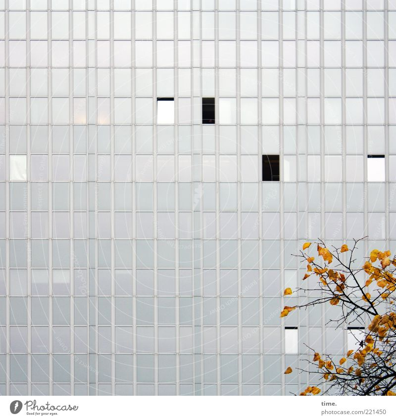 Courtyard with autumn decoration Environment Nature Autumn Leaf High-rise Architecture Facade Window Gray Branch Glas facade Open Closed Parallel Vertical