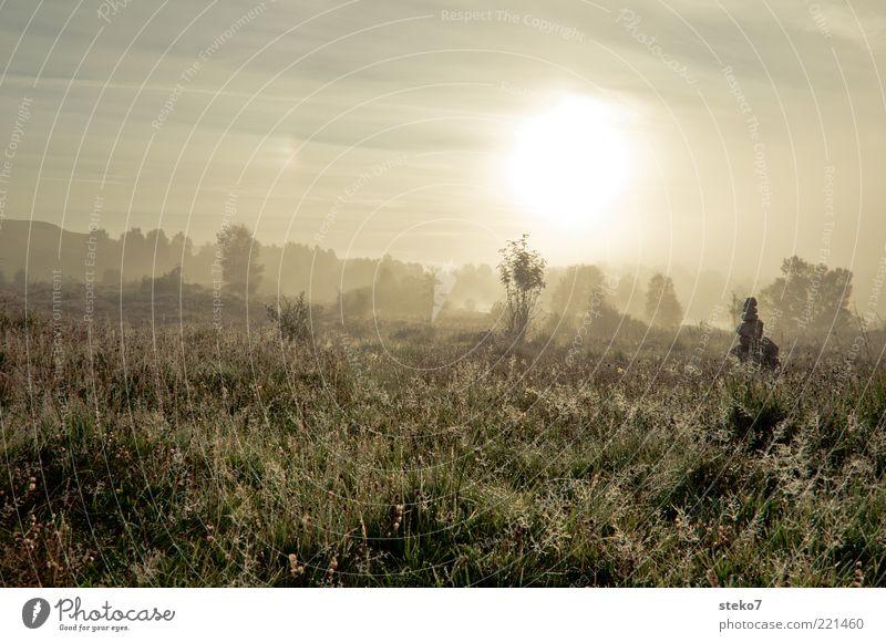 Nature Sun Calm Far-off places Meadow Grass Landscape Drops of water Horizon Esthetic Dew Blade of grass Scotland Dawn Rich pasture